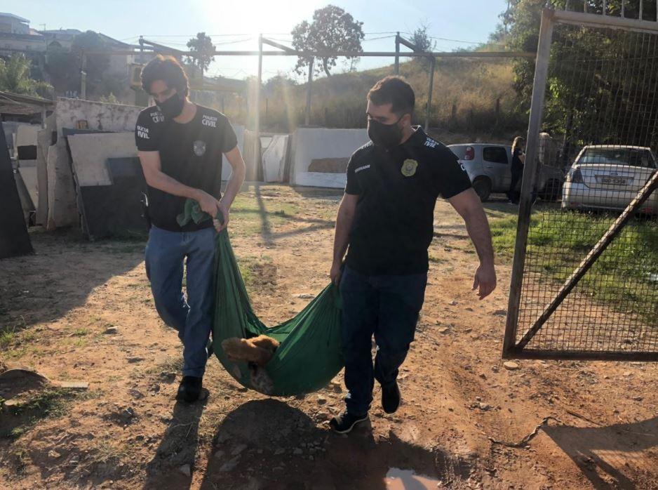 Mulher é presa em Belo Horizonte suspeita de maus-tratos a animais, em 1ª operação após Lei Sansão