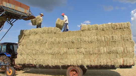 Agricultores investem em maquinário para produzir feno