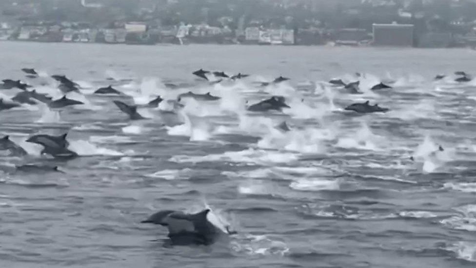 Grupo de golfinhos dá espetáculo na costa da Califórnia - Notícias - Plantão Diário