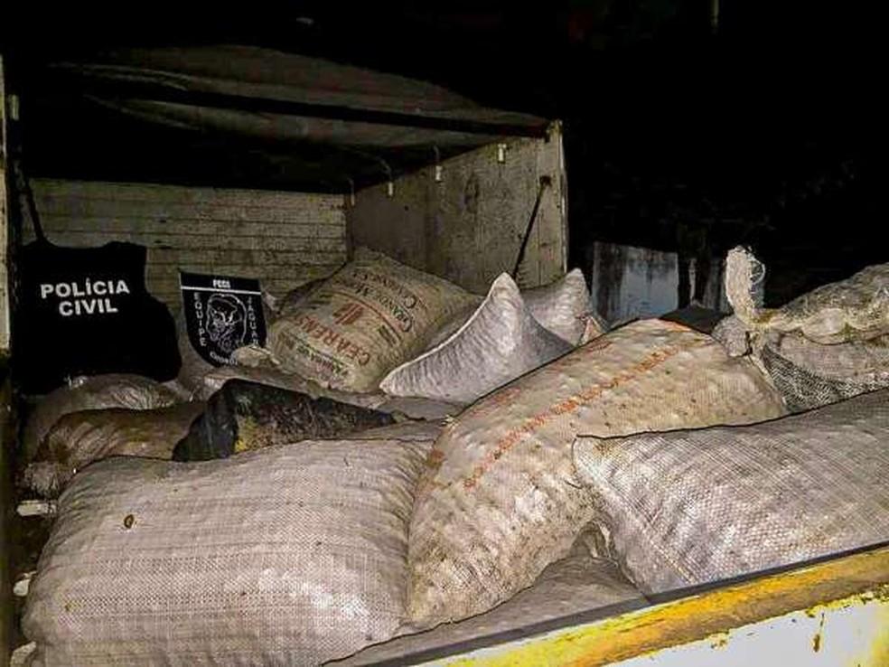 Os 31 sacos de castanha foram recuperados e devolvidos pela polícia ao proprietário. — Foto: Divulgação