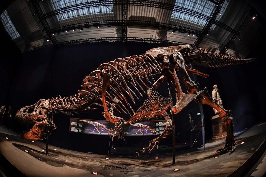 Boca de T-rex fica na altura de visitantes da mostra (Foto: Stephane de Sakutin/AFP)