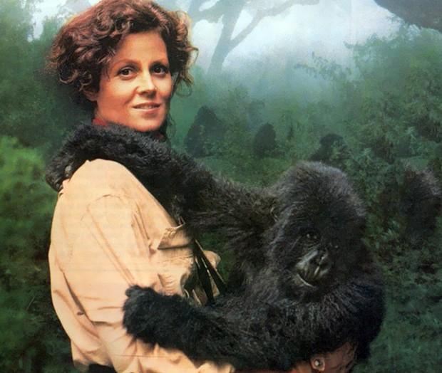 Cena de Nas Montanhas dos Gorilas (Foto: Divulgação)