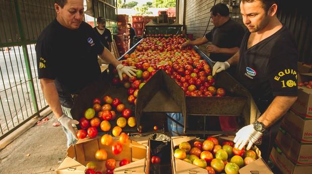 Carregamento de tomate chega ao Ceagesp, em São Paulo (Foto: Estadão Conteúdo)