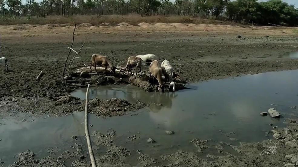 Seis anos de estiagem no Ceará levaram açudes à mais baixa reserva de água (Foto: TV Verdes Mares/Reprodução)