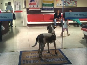 Cachorro ficou na porta do hospital por oito dias (Foto: Reprodução/ Greice Batista da Silva)