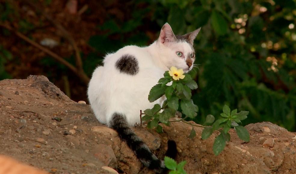 Denúncias de maus-tratos a animais aumentam 200% em Teresina, diz Polícia Civil — Foto: TV Clube