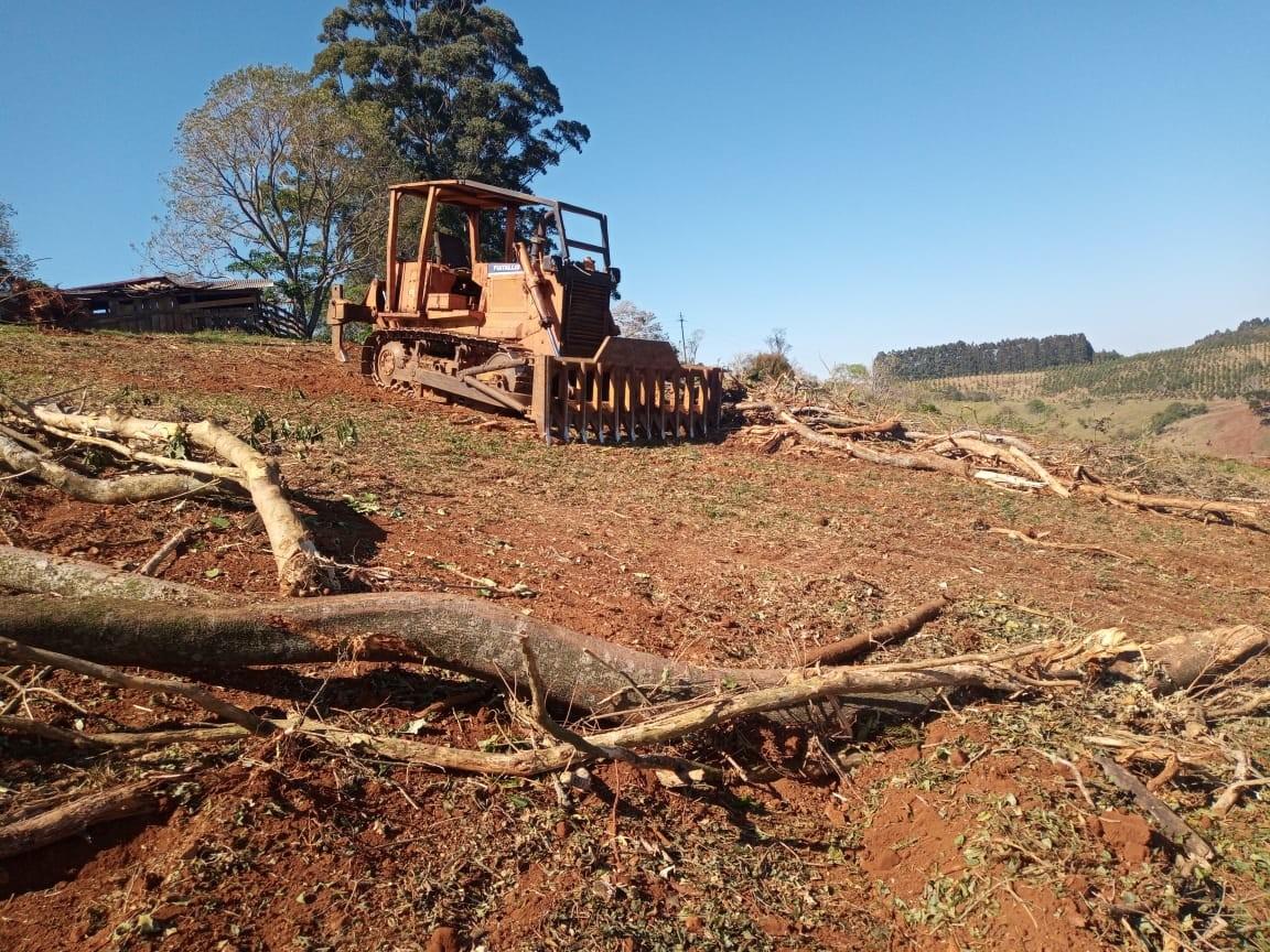 Suspeitos de cortar quase 200 árvores nativas ilegalmente são presos e multados em R$ 213 mil no Paraná, diz polícia