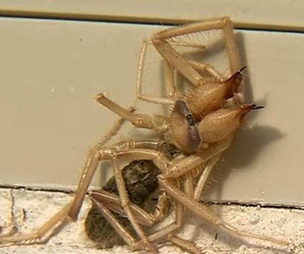 Criatura meio aranha, meio escorpião