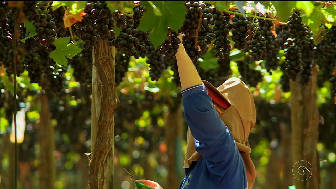 Arábia Saudita abre mercado para castanhas e derivados de ovos do Brasil e promete ampliar compra de frutas - Notícias - Plantão Diário