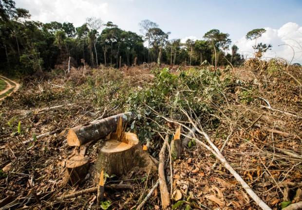 Área de desmatamento ; meio ambiente ; corte de árvores ;  (Foto: Reprodução/Facebook)