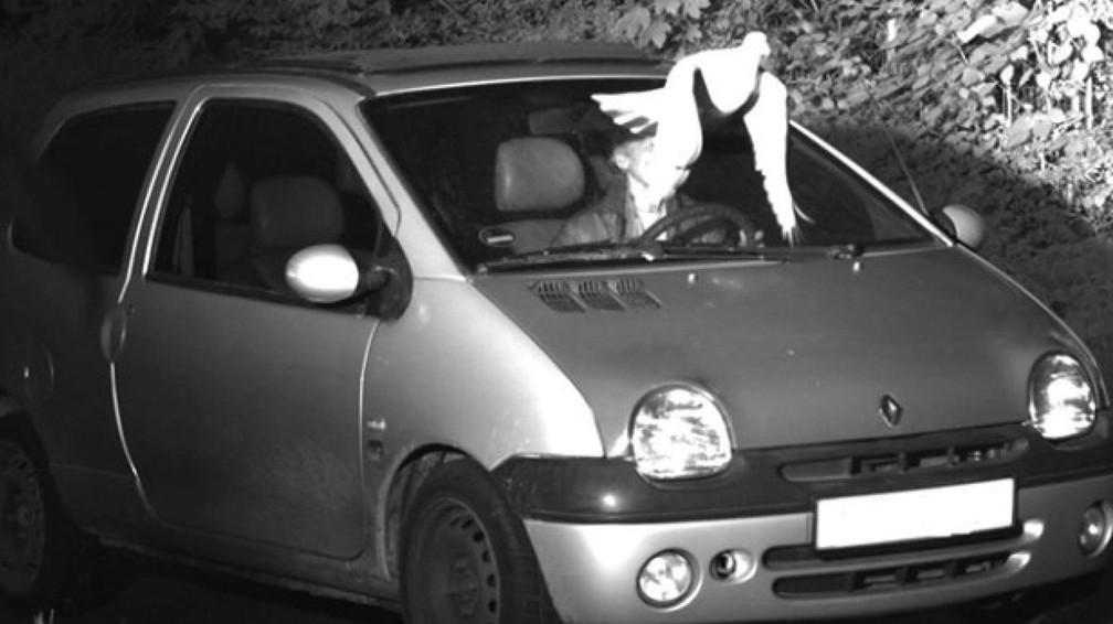 Pombo livra motorista de ser multado por excesso de velocidade na Alemanha — Foto: Presseportal Polizei Viersen/Reprodução