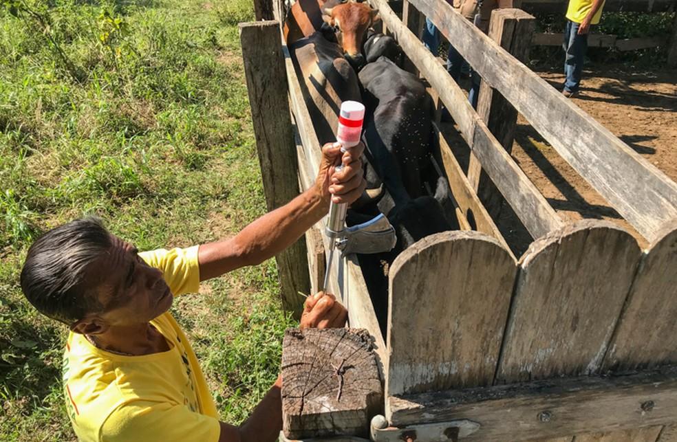 Campanha de vacinação contra aftosa começou em todo o Tocantins — Foto: Jean Barreto/Arquivo Secom