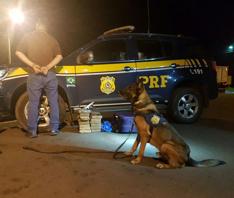 Cães farejadores localizaram droga em um ônibus no Sul do Piauí (Foto: Divulgação/PRF)