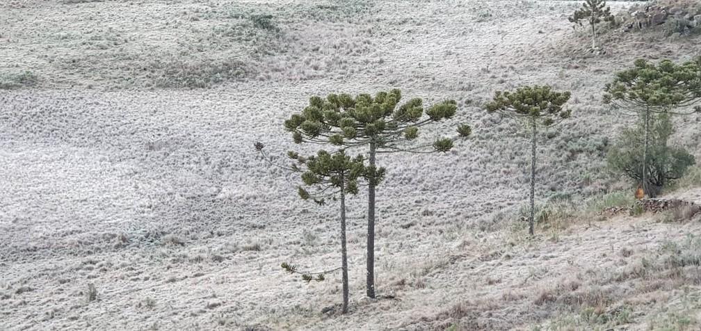 Serra catarinense na manhã desta quarta-feira — Foto: Mycchel Legnaghi