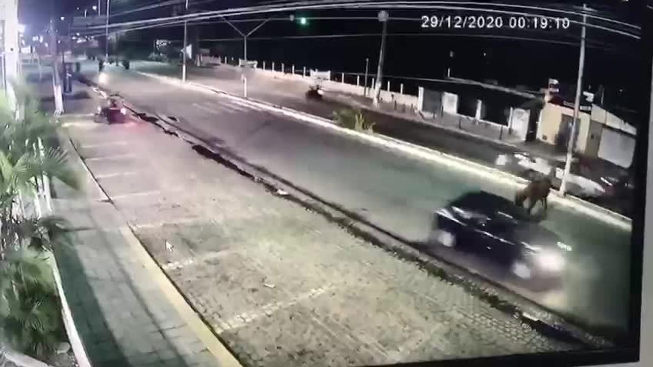 Carro atropela dois cavalos em principal avenida da zona Norte de Natal