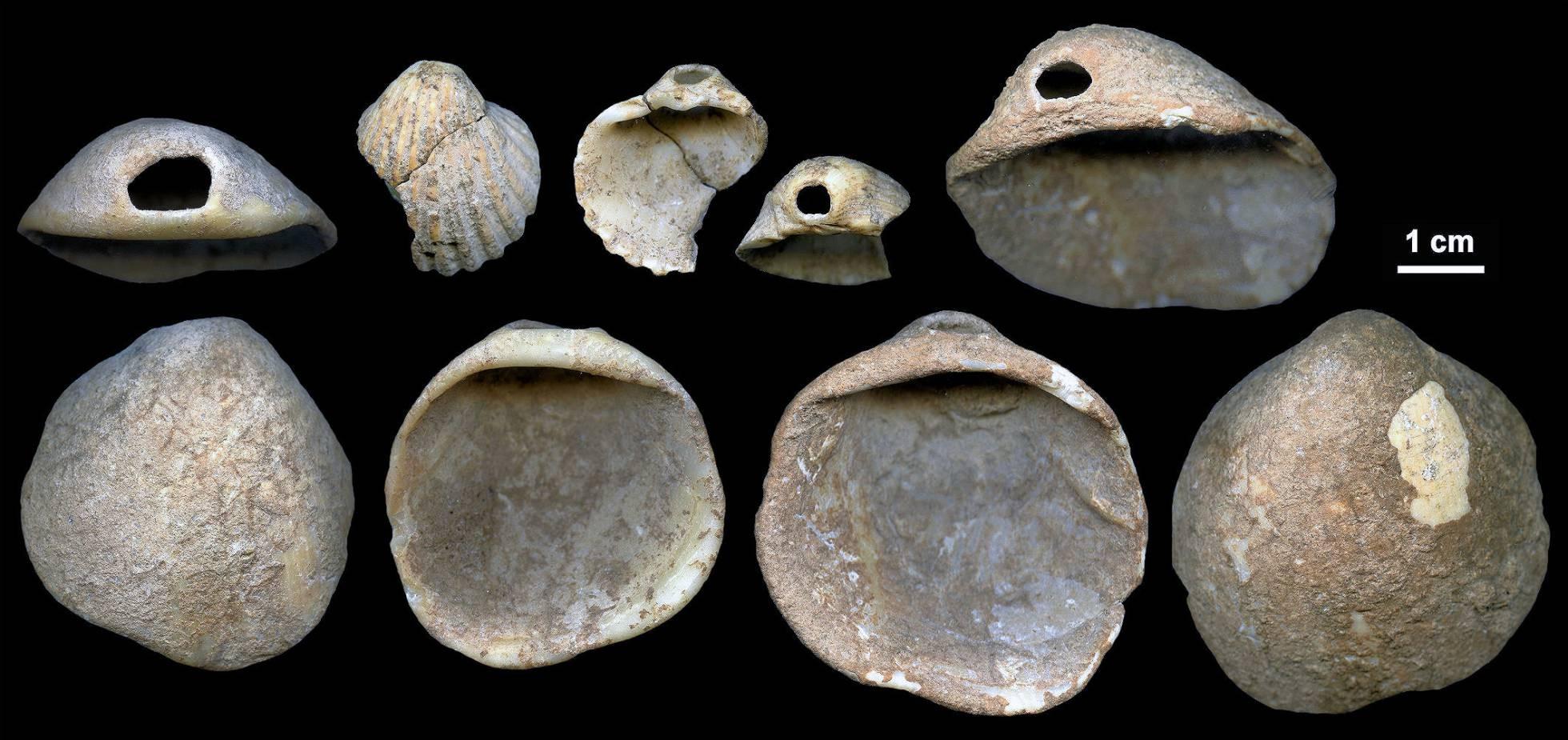 Conchas usadas como ornamentos (Foto: Divulgação)