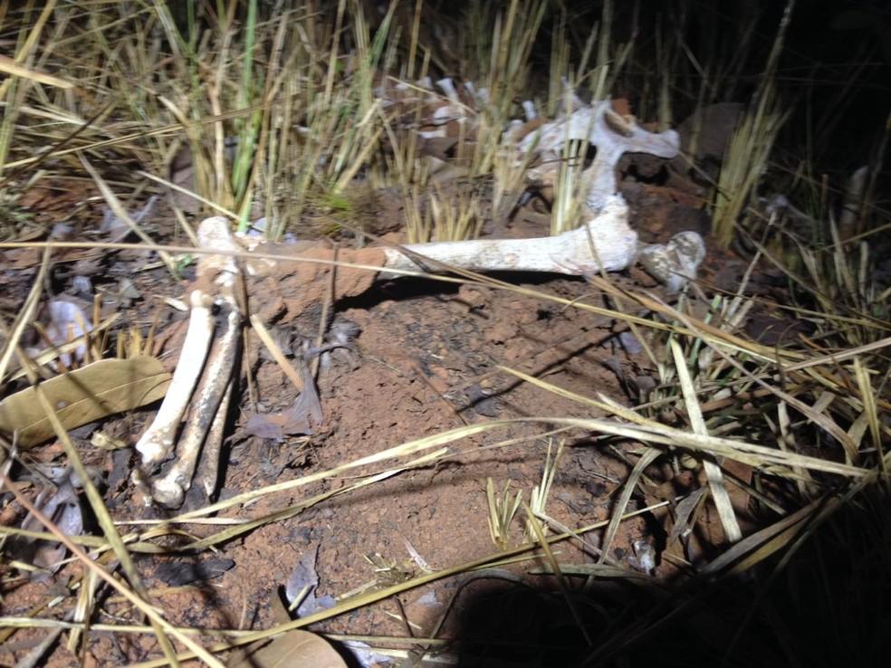 Ossos estavam em matagal na região norte de Palmas — Foto: Wilton Dias/TV Anhanguera