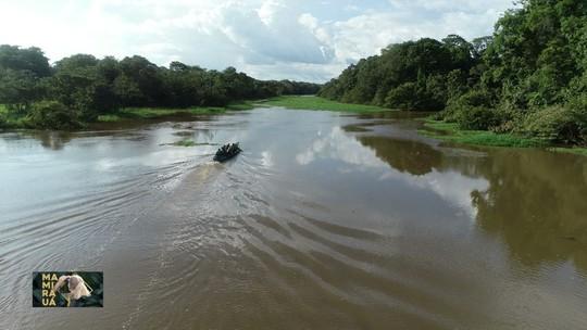 Mamirauá: Onça pintada é parceira do turismo na Amazônia