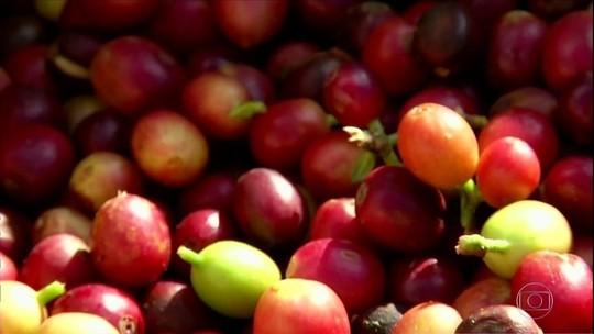 Fazendas históricas no Rio voltam a produzir café e turismo aumenta