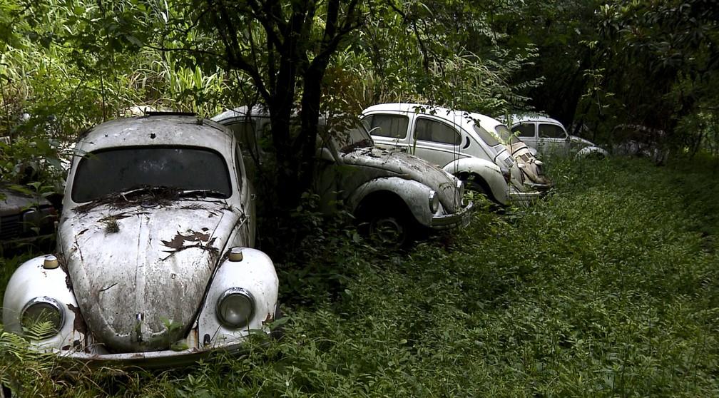 Militar aposentado tinha preferência por Fuscas em sua coleção de 350 carros (Foto: Reprodução/EPTV)