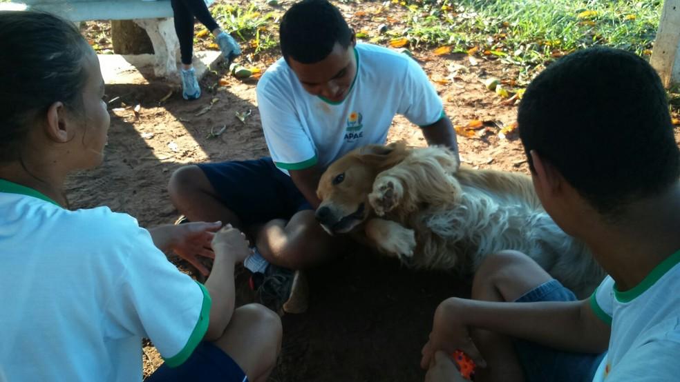 Aulas com os cães são realizadas uma vez por semana com grupos de 8 a 12 alunos em Bauru (Foto: Divulgação)