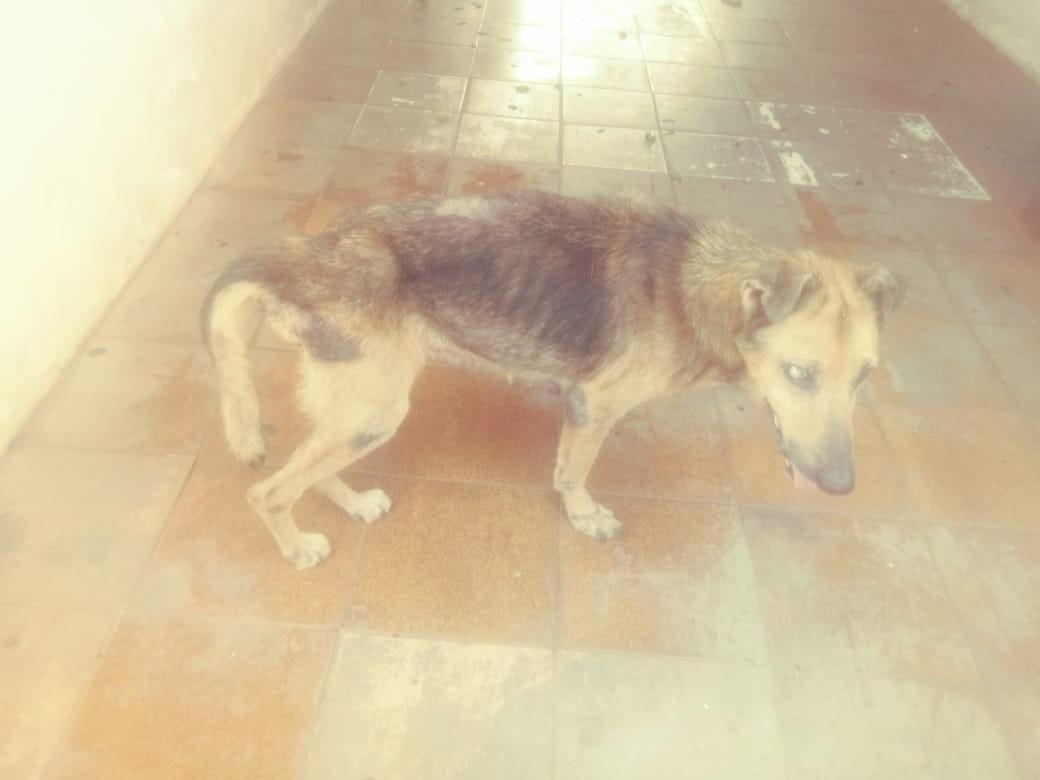 Denúncias levam polícia a resgatar cães de imóvel à venda: 'Comiam goiabas de planta que caía no local'