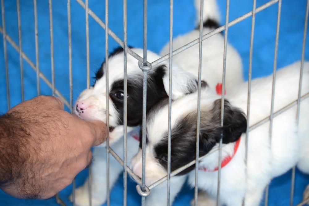Rio Claro tem evento para adoção de animais neste sábado; veja regras para participar