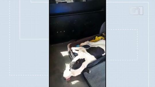 Cachorro ferido é resgatado dentro de mala fechada em zona rural do DF; vídeo