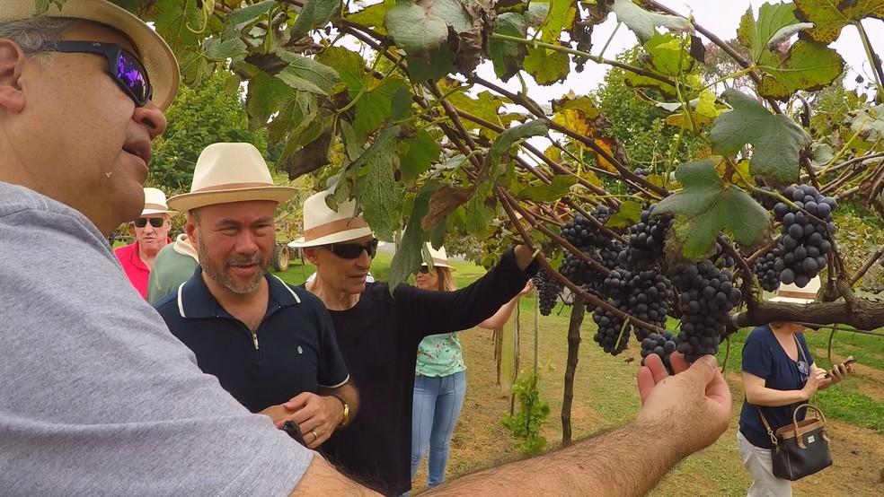 Sommeliers cegos visitam vinícola em São Roque (SP) — Foto: Reprodução/TV TEM
