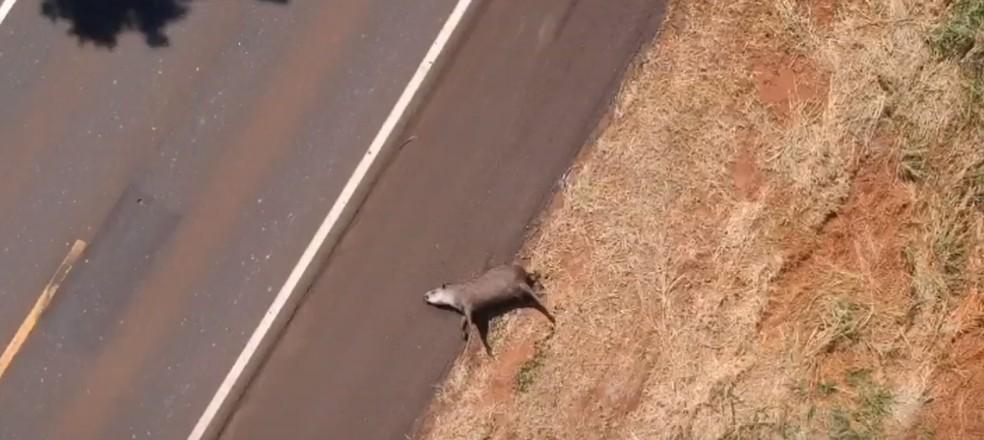 Projeto Bandeiras e Rodovias monitora mortes de animais silvestres em rodovias do Brasil — Foto: Projeto Bandeiras e Rodovias/Divulgação