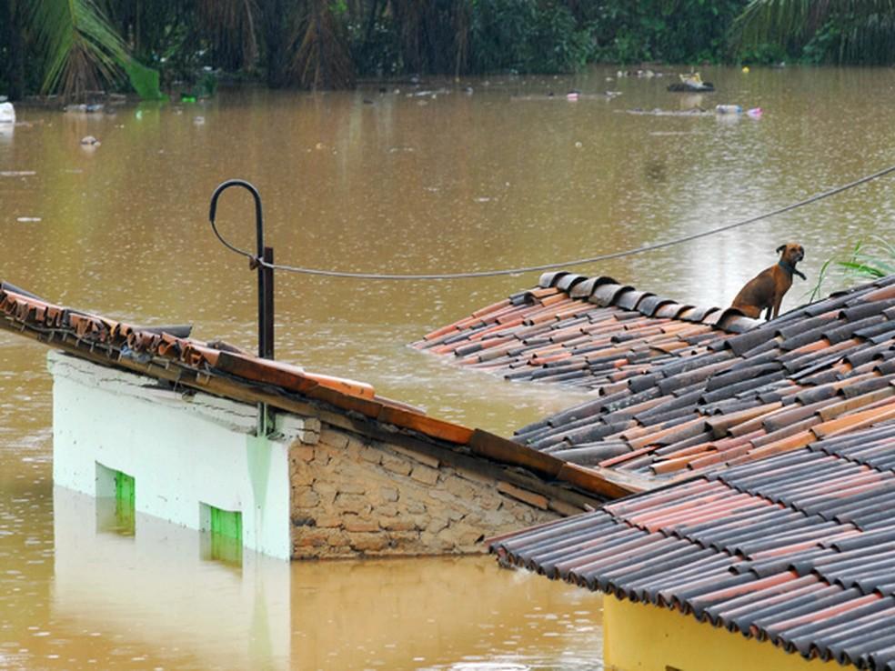 Cachorro tenta escapar de enchente em telhado de casa, durante enchentes em Água Preta (PE) (Foto: Bobby Fabisak/JC Imagem/AE)
