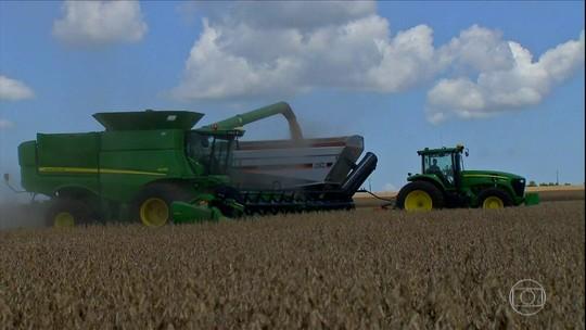 Agricultores colhem soja em MS, mas produtividade deve cair