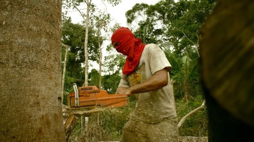 Madeireiro derruba árvore em área protegida nos arredores de Porto Velho; Rondônia já perdeu um terço de sua mata nativa. — Foto: BBC