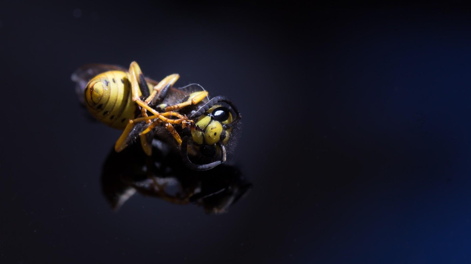 A soja, principal produto de exportação brasileiro, é depende da polinização por insetos.   (Foto: Creative Commons / diffe88)