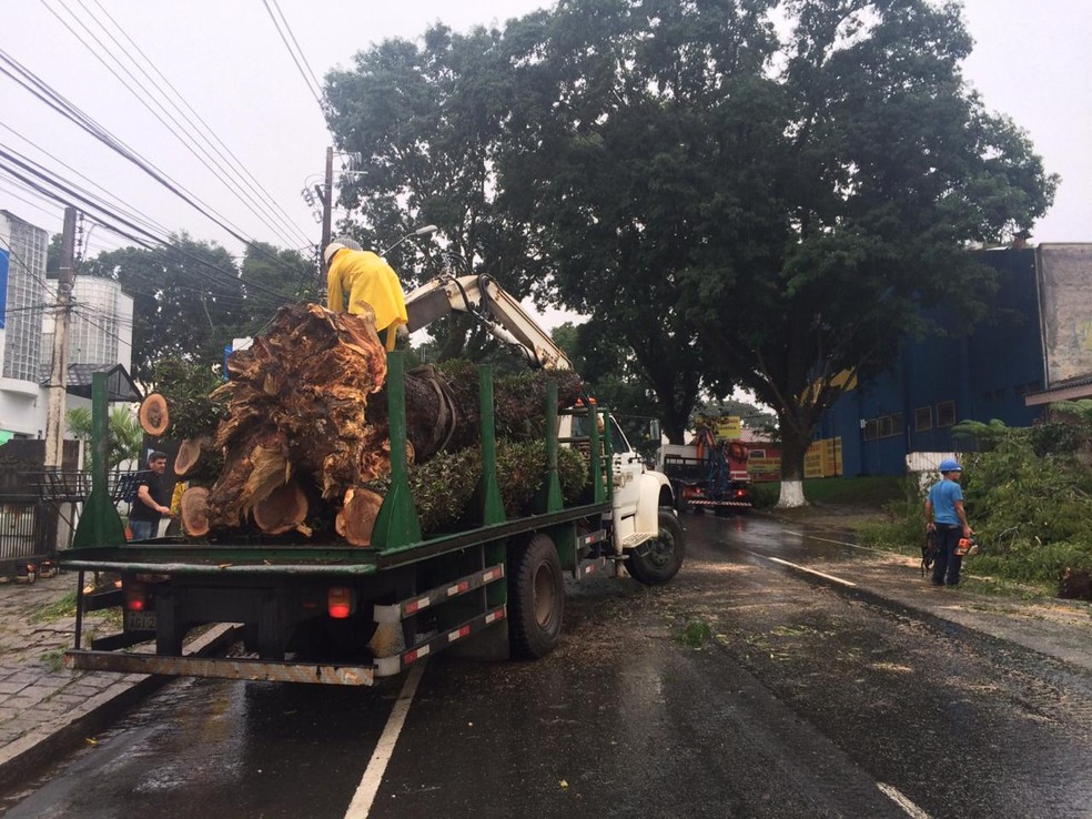 Situação ocorreu na manhã desta terça-feira (28), na Rua México — Foto: Valquiria Silva/RPC