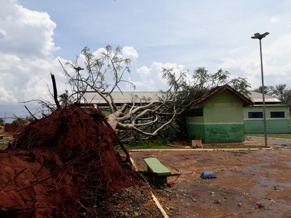 Árvore de grande porte caiu sobre escola após temporal em Bandeirantes (MS). — Foto: Thiago Willian
