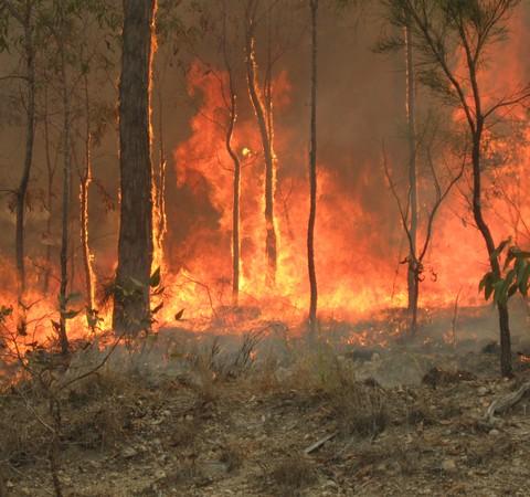 Incêndios na Austrália queimaram 1,6 milhão de hectares desde julho