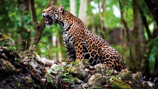 Foto: (WWF / AFP )