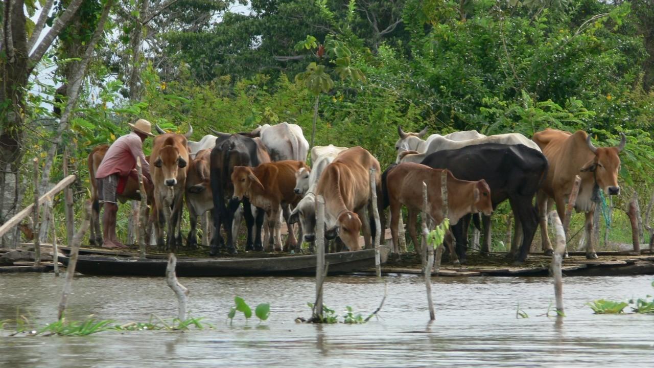 Frequência das enchentes do rio Amazonas aumenta cinco vezes em 100 anos
