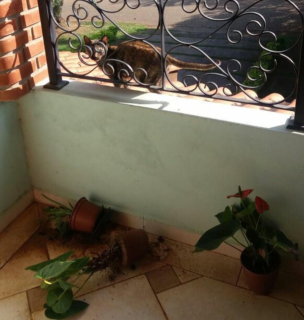 """De acordo com a família, Saura derrubou vasos """"de propósito""""  (Foto: Arquivo Pessoal/Divulgação)"""