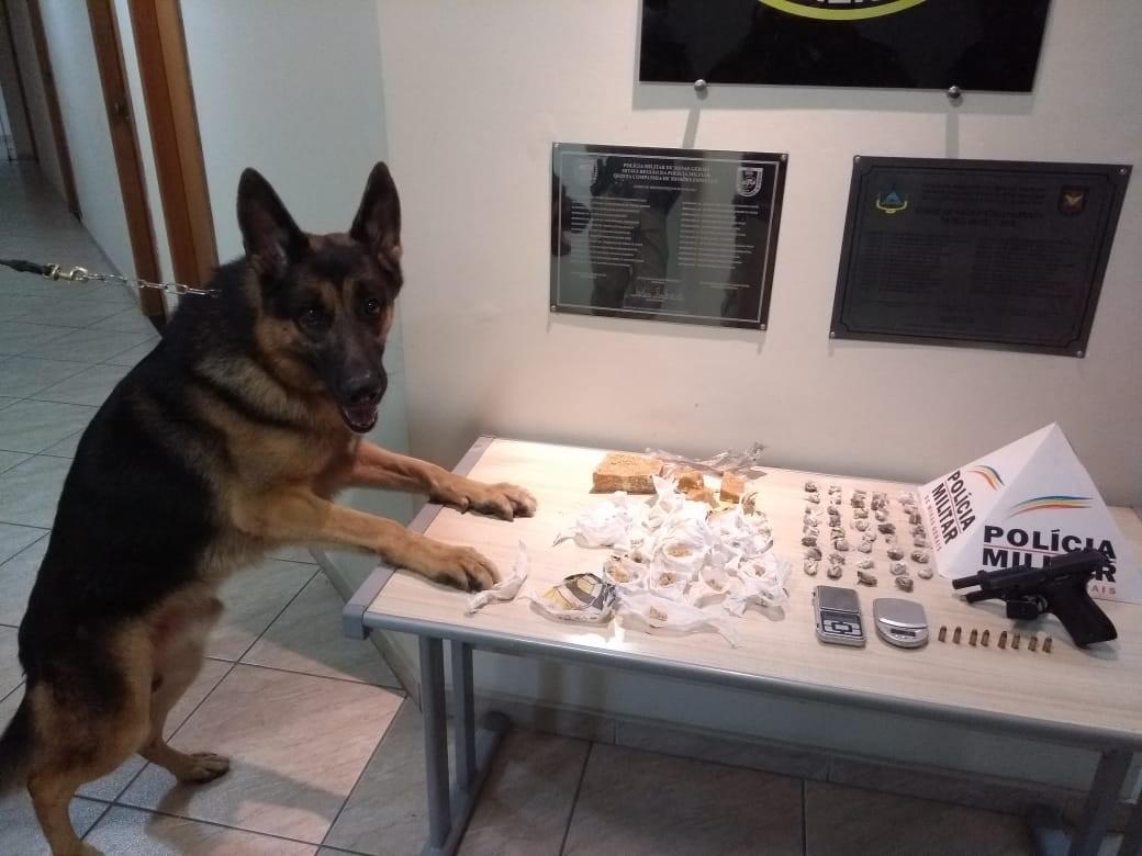 Com ajuda de cão farejador, PM apreende drogas, arma e munições em Governador Valadares