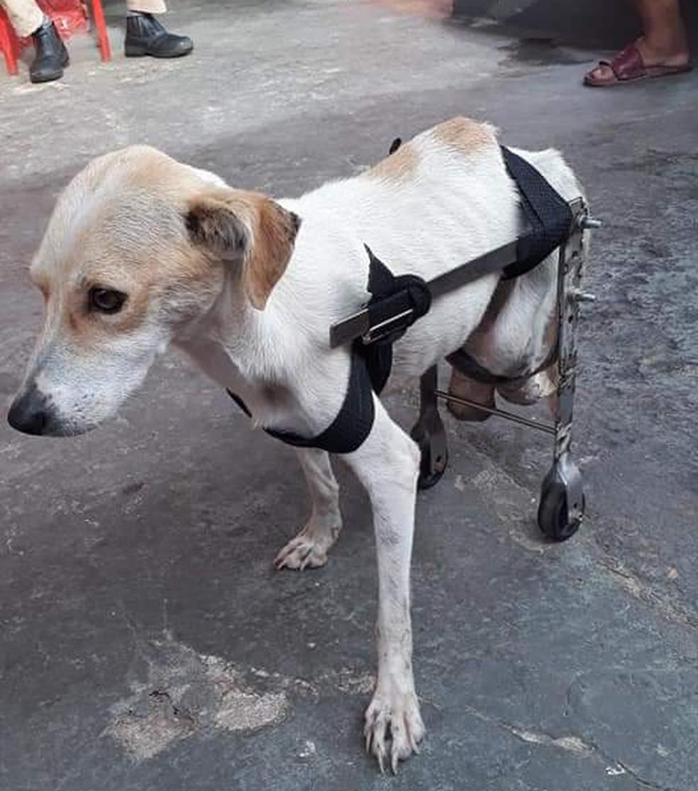 Vitória ganhou uma cadeirinha de rodas de uma das pessoas que tirou um tempo para ajudá-la — Foto: Reprodução/Facebook/Bombeiros Civis de Oriximiná