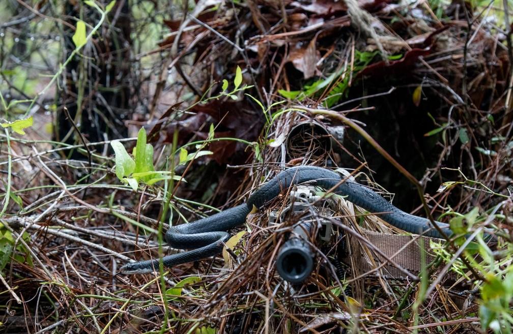 Cobra passa por arma de atirado de elite durante treinamento (Foto: Sgt. William Frye/ Alabama National Guard)