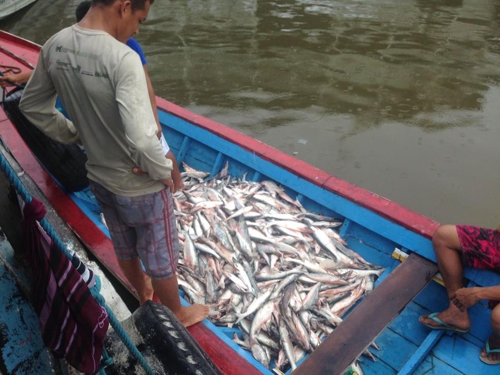 Pescado foi distribuído para moradores de comunidades da Flona  (Foto: Divulgação/ICMBio)