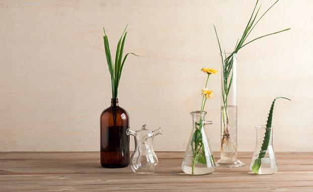 plantas-remédios-naturais-horta-em-casa.jpg (Foto: Iara Venanzi/Editora Globo)