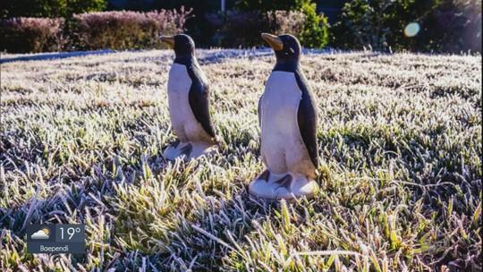 Em manhã de geada, Monte Verde e Maria da Fé têm temperaturas negativas; FOTOS