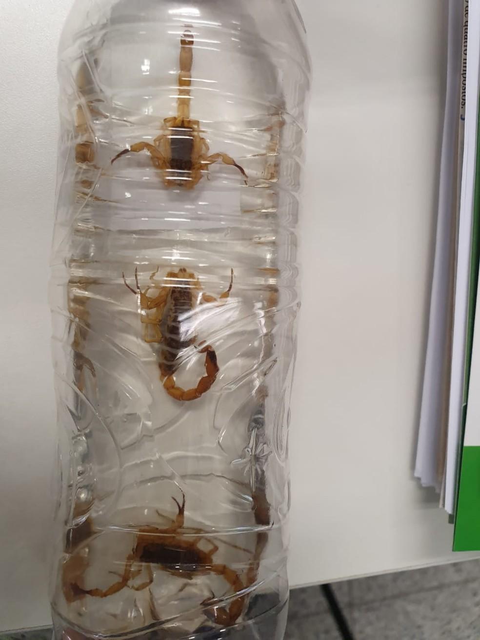 Três escorpiões foram encontrados no subsolo da Ala Alexandre Costa, no Senado Federal — Foto: Divulgação
