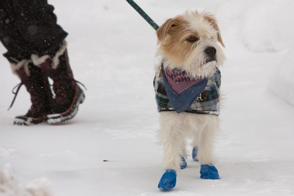 Cachorro anda em rua congelada de Buffalo, Nova York, durante onda de frio nos EUA — Foto: Lindsay DeDario/Reuters