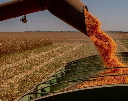 Anec projeta redução na exportação de milho e nenhum embarque de soja até sábado