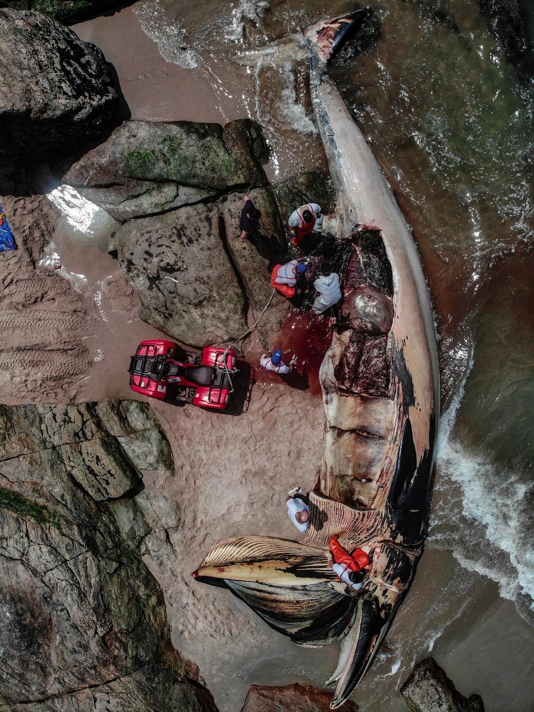 Baleia foi encontrada morta na Praia de Pernambuco, em Guarujá, SP — Foto: Arquivo Pessoal/Rodrigo Nattan